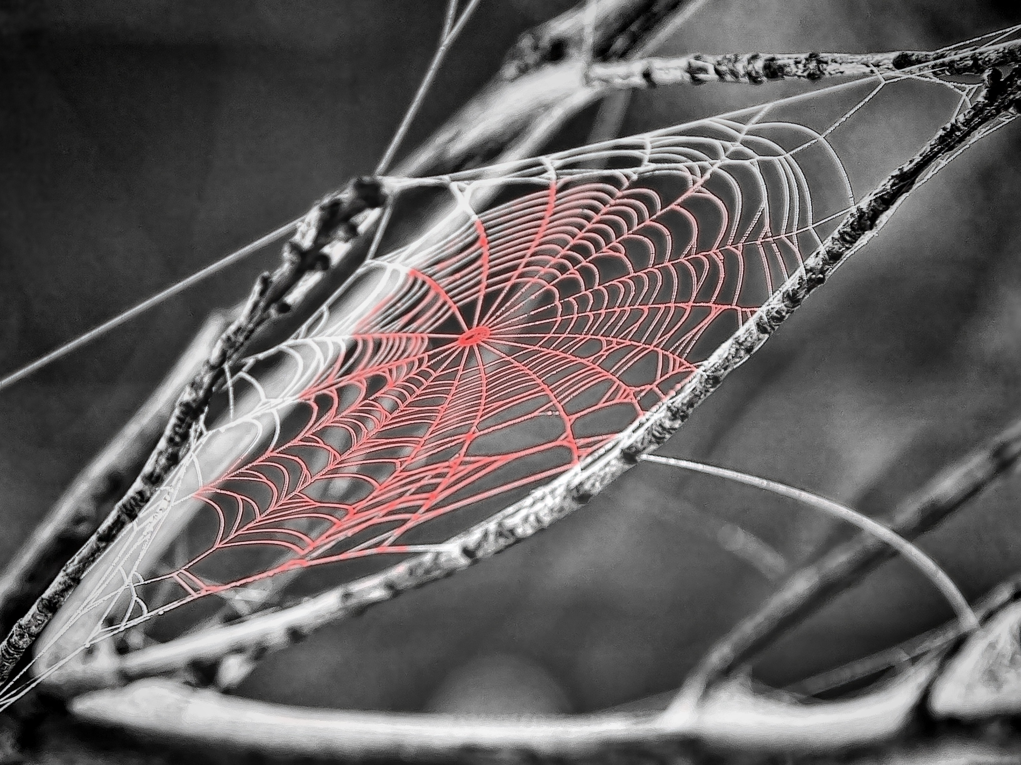 These Tangled Webs