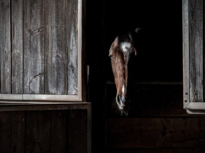 Pony Stories For Grown-ups