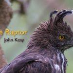 The Raptor - John Keay