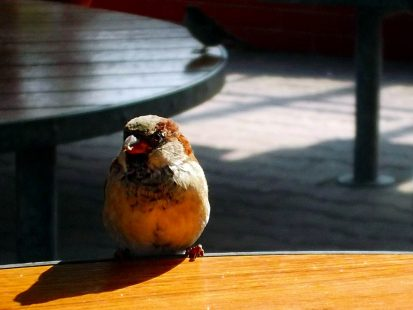 The Sparrow Who Could Play Piano And Other Necessary Temptations