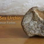 The Sea Urchin