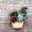 Flowerpot on a wall
